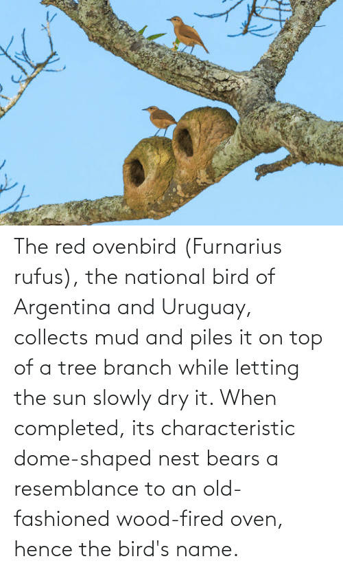 resemblance: The red ovenbird (Furnarius rufus), the national bird of Argentina and Uruguay, collects mud and piles it on top of a tree branch while letting the sun slowly dry it. When completed, its characteristic dome-shaped nest bears a resemblance to an old-fashioned wood-fired oven, hence the bird's name.