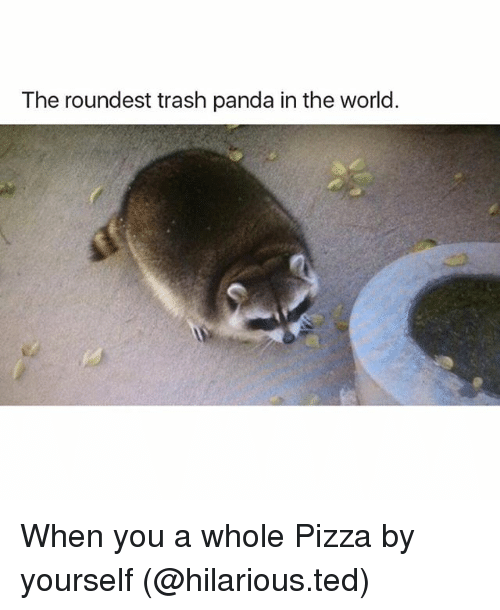 Funny, Pizza, and Ted: The roundest trash panda in the world. When you a whole Pizza by yourself (@hilarious.ted)