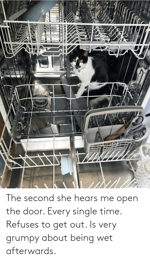 Aww Memes: The second she hears me open the door. Every single time. Refuses to get out. Is very grumpy about being wet afterwards.