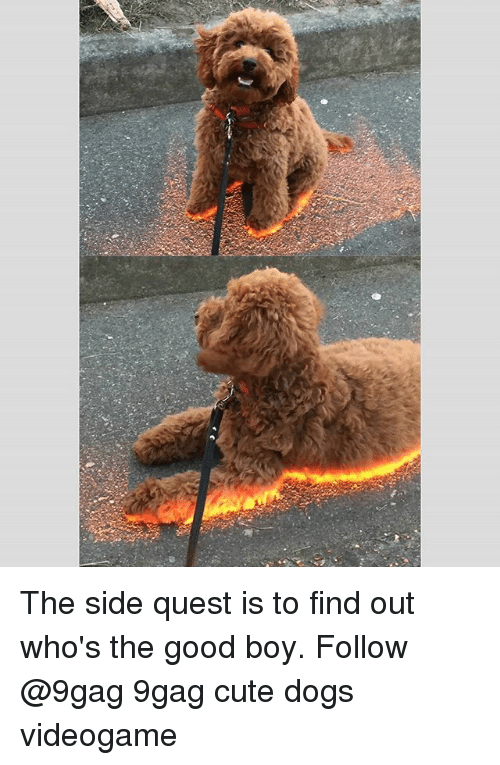 cute dogs: The side quest is to find out who's the good boy. Follow @9gag 9gag cute dogs videogame
