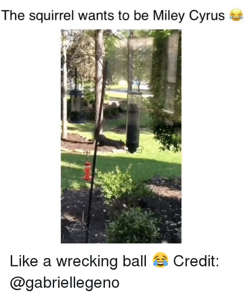 Memes, Miley Cyrus, and Miley Cyrus: The squirrel wants to be Miley Cyrus se Like a wrecking ball 😂 Credit: @gabriellegeno