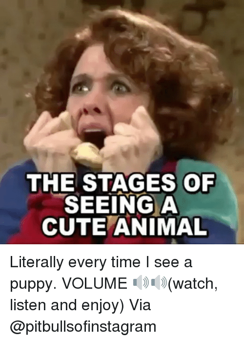 Cute, Memes, and Animal: THE STAGES OF  SEEING A  CUTE ANIMAL Literally every time I see a puppy. VOLUME 🔊🔊(watch, listen and enjoy) Via @pitbullsofinstagram
