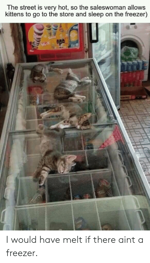 Kittens, Sleep, and Freezer: The street is very hot, so the saleswoman allows  kittens to go to the store and sleep on the freezer)  YEN I would have melt if there aint a freezer.