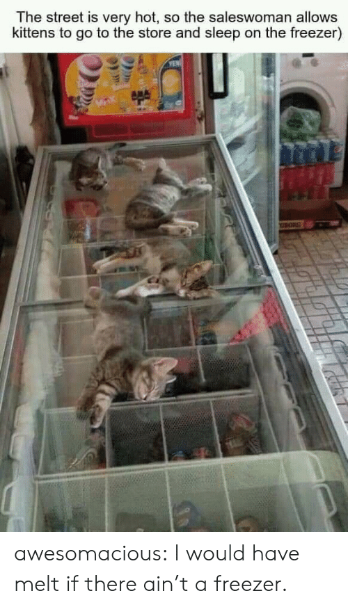 Kittens: The street is very hot, so the saleswoman allows  kittens to go to the store and sleep on the freezer)  YEN awesomacious:  I would have melt if there ain't a freezer.