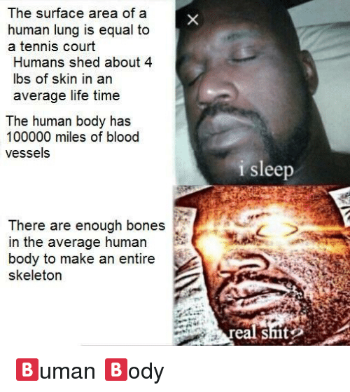 skeletor: The surface area of a  human lung is equal to  a tennis court  Humans shed about 4  bs of skin in an  average life time  The human body has  100000 miles of blood  vessels  i sleep  There are enough bones  in the average human  body to make an entire  skeletor  eal shit <p>🅱️uman 🅱️ody</p>