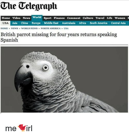 speaking spanish: The Telegraph  Home Video News  World  Sport Finanee Comment Culture Travel Life Women F  USA  Asia China Europe Middle East Australasia Africa South America Central Asia  HOME NEWS WORLD NEWS NORTH AMERICA USA  British parrot missing for four years returns speaking  Spanish me🐦irl