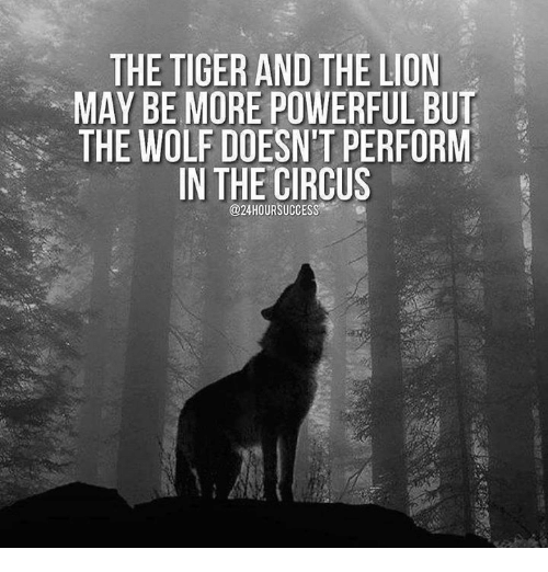 Lion, Tiger, and Wolf: THE TIGER AND THE LION  MAY BE MORE POWERFUL BUT  THE WOLF DOESNT PERFORM  IN THE CIRCUS  @24HOURSUCCESS