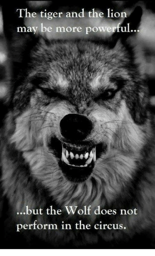 Doe, Memes, and Lion: The tiger and the lion  may be more powerful  ...but the Wolf does not  perform in the circus.