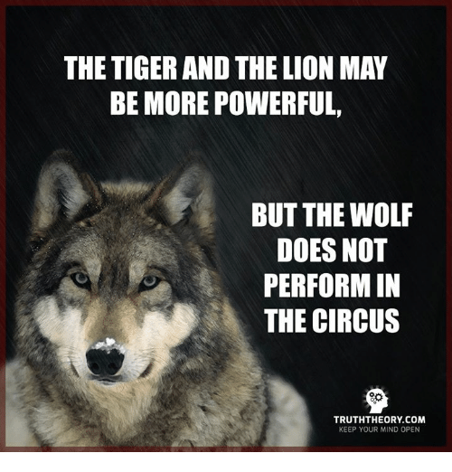 Memes, Lion, and Lions: THE TIGER AND THE LION MAY  BE MORE POWERFUL,  BUT THE WOLF  DOES NOT  PERFORM IN  THE CIRCUS  TRUTHTHEORY COM  KEEP YOUR MIND OPEN