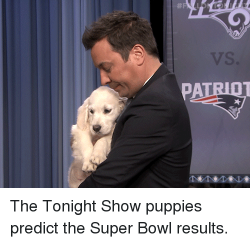 Puppies, Super Bowl, and Target: The Tonight Show puppies predict the Super Bowl results.
