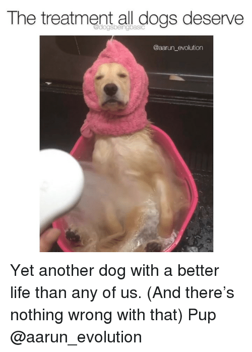 Dogs, Life, and Memes: The treatment all dogs deserve  @aarun_evolution Yet another dog with a better life than any of us. (And there's nothing wrong with that) Pup @aarun_evolution