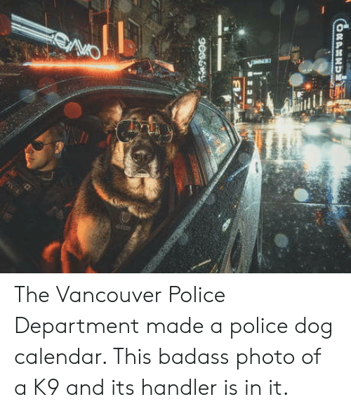 Police, Calendar, and Vancouver: The Vancouver Police Department made a police dog calendar. This badass photo of a K9 and its handler is in it.