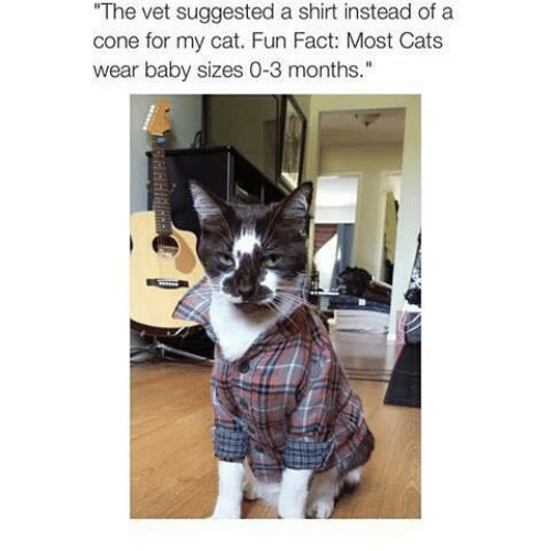 Cats, Memes, and Baby: The vet suggested a shirt instead of a  cone for my cat. Fun Fact: Most Cats  wear baby sizes 0-3 months.""