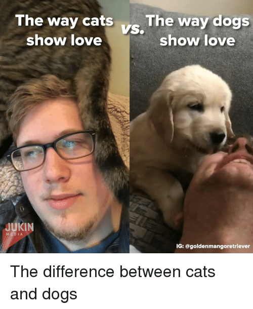 Cats, Dogs, and Love: The way cats The way dogs  VS.  show love  show love  JUKIN  IG: @goldenmangoretriever The difference between cats and dogs