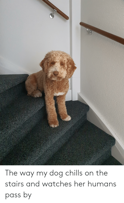 chills: The way my dog chills on the stairs and watches her humans pass by
