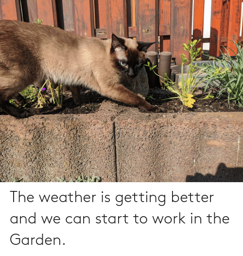 The Weather: The weather is getting better and we can start to work in the Garden.