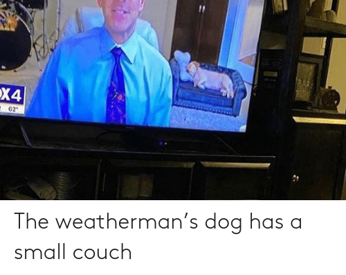 Dog Has: The weatherman's dog has a small couch