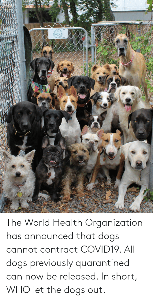 Organization: The World Health Organization has announced that dogs cannot contract COVID19. All dogs previously quarantined can now be released. In short, WHO let the dogs out.