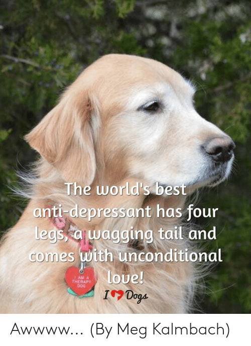 Dogs Memes And Best The World S Anti Depressant Has Four Egs