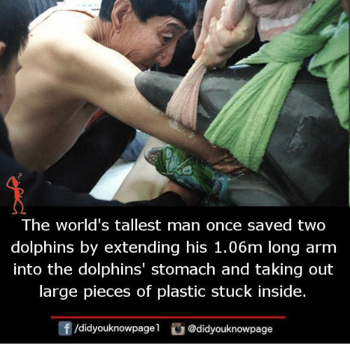 Memes, Dolphins, and 🤖: The world's tallest man once saved two  dolphins by extending his 1.06m long arm  into the dolphins' stomach and taking out  arge pieces of plastiC stuck inside.  団/d.dyouknowpagel  O@didyouknowpage