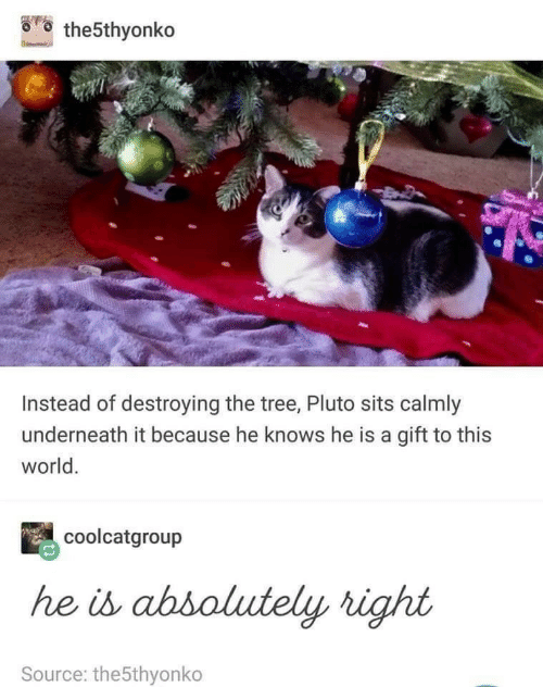 Pluto, Tree, and World: the5thyonko  Instead of destroying the tree, Pluto sits calmly  underneath it because he knows he is a gift to this  world.  coolcatgroup  he is abbolutely right  Source: the5thyonko