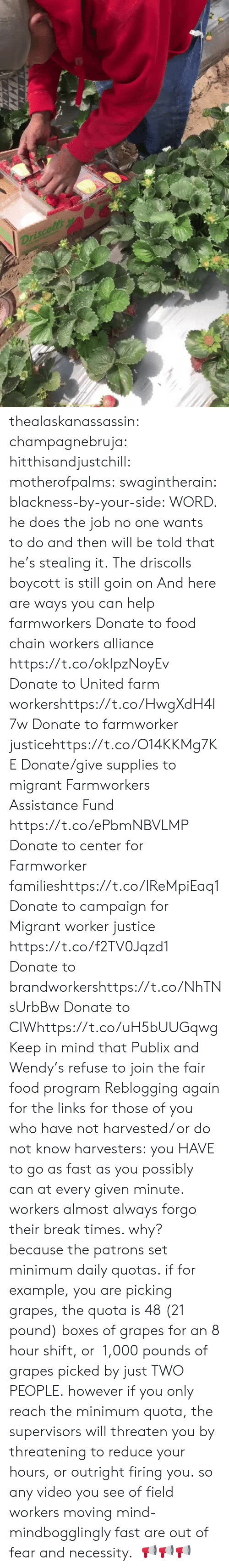 Campaigner: thealaskanassassin:  champagnebruja:  hitthisandjustchill:  motherofpalms:  swagintherain:  blackness-by-your-side:  WORD.  he does the job no one wants to do and then will be told that he's stealing it.   The driscolls boycott is still goin on And here are ways you can help farmworkers Donate to food chain workers alliance  https://t.co/okIpzNoyEv Donate to United farm workershttps://t.co/HwgXdH4l7w Donate to farmworker justicehttps://t.co/O14KKMg7KE Donate/give supplies to migrant Farmworkers Assistance Fund https://t.co/ePbmNBVLMP Donate to center for Farmworker familieshttps://t.co/IReMpiEaq1 Donate to campaign for Migrant worker justice https://t.co/f2TV0Jqzd1 Donate to brandworkershttps://t.co/NhTNsUrbBw Donate to CIWhttps://t.co/uH5bUUGqwg Keep in mind that Publix and Wendy's   refuse to join the fair food program   Reblogging again for the links  for those of you who have not harvested/ or do not know harvesters: you HAVE to go as fast as you possibly can at every given minute. workers almost always forgo their break times. why? because the patrons set minimum daily quotas. if for example, you are picking grapes, the quota is 48 (21 pound) boxes of grapes for an 8 hour shift, or 1,000 pounds of grapes picked by just TWO PEOPLE.however if you only reach the minimum quota, the supervisors will threaten you by threatening to reduce your hours, or outright firing you. so any video you see of field workers moving mind-mindbogglingly fast are out of fear and necessity.   📢📢📢
