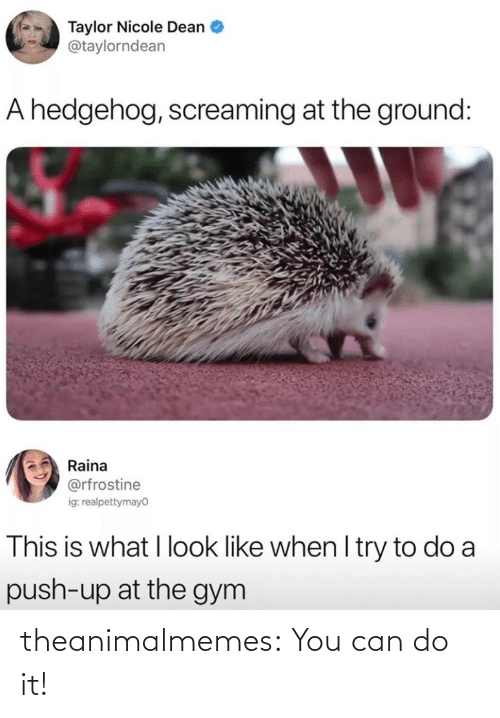 Can Do: theanimalmemes:  You can do it!⁠
