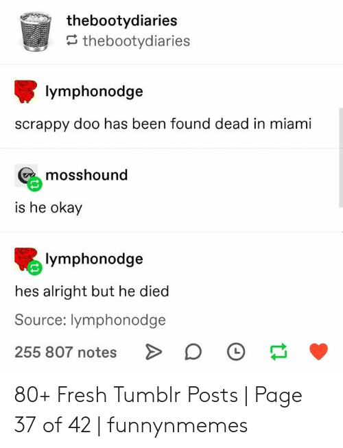 Fresh, Tumblr, and Okay: thebootydiaries  thebootydiaries  lymphonodge  scrappy doo has been found dead in miami  mosshound  is he okay  lymphonodge  hes alright but he died  Source: lymphonodge  255 807 notes 80+ Fresh Tumblr Posts | Page 37 of 42 | funnynmemes
