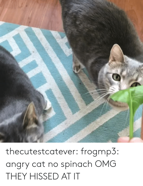 Angry Cat: thecutestcatever: frogmp3: angry cat no spinach  OMG THEY HISSED AT IT