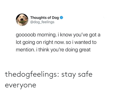 Stay Safe: thedogfeelings:  stay safe everyone