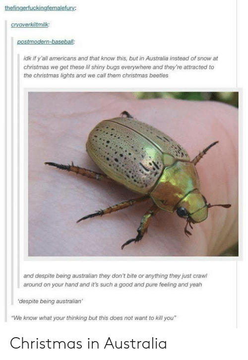 "Does Not Want: thefingerfuckingfemalefury:  cryoverkiltmilk:  postmodern-baseball  idk if y'all americans and that know this, but in Australia instead of snow at  christmas we get these lil shiny bugs everywhere and they're attracted to  the christmas lights and we call them christmas beetles  and despite being australian they don't bite or anything they just crawl  around on your hand and it's such a good and pure feeling and yeah  'despite being australian'  ""We know what your thinking but this does not want to kill you"" Christmas in Australia"