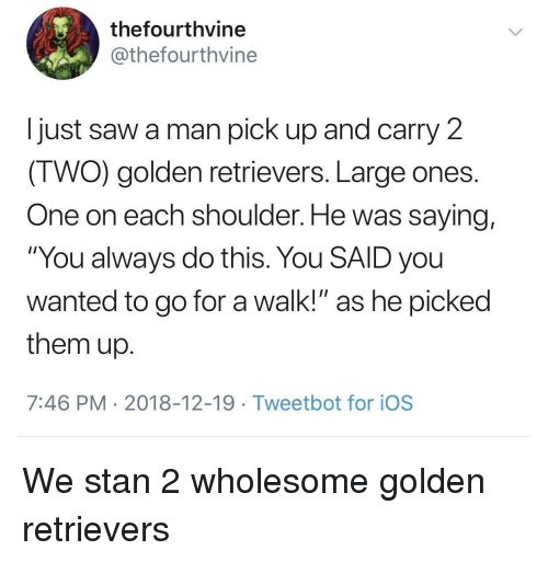 "Saw, Stan, and Wholesome: thefourthvine  @thefourthvine  I just saw a man pick up and carry 2  IWO) golden retrievers. Large ones  One on each shoulder. He was saying,  ""You always do this. You SAID you  wanted to go for a walk!"" as he picked  them up  7:46 PM 2018-12-19 Tweetbot for ioS We stan 2 wholesome golden retrievers"