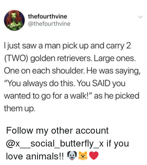 """Love Animals: thefourthvine  @thefourthvine  Ijust saw a man pick up and carry 2  (TWO) golden retrievers. Large ones.  One on each shoulder. He was saying,  """"You always do this. You SAID you  wanted to go for a walk!"""" as he picked  them up. Follow my other account @x__social_butterfly_x if you love animals!! 🐶🐱❤"""