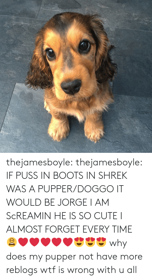 Cute, Shrek, and Target: thejamesboyle: thejamesboyle:  IF PUSS IN BOOTS IN SHREK WAS A PUPPER/DOGGO IT WOULD BE JORGE I AM ScREAMIN HE IS SO CUTE I ALMOST FORGET EVERY TIME 😩❤️❤️❤️❤️❤️😍😍😍  why does my pupper not have more reblogs wtf is wrong with u all
