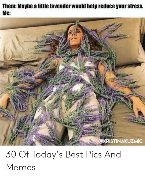 Lavender: Them: Maybe a little lavender would help reduce your stress.  Me:  KRISTINAKUZMIC 30 Of Today's Best Pics And Memes