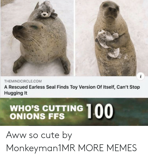 hugging: THEMINDCIRCLE.COM  A Rescued Earless Seal Finds Toy Version Of Itself, Can't Stop  Hugging It  WHO'S CUTTING  ONIONS FFS  00 Aww so cute by Monkeyman1MR MORE MEMES