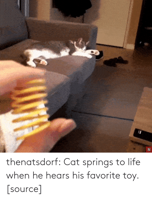 His Favorite: thenatsdorf:  Cat springs to life when he hears his favorite toy. [source]