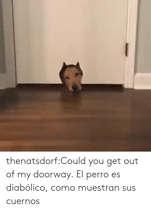 Tumblr, Blog, and Com: thenatsdorf:Could you get out of my doorway.  El perro es diabólico, como muestran sus cuernos