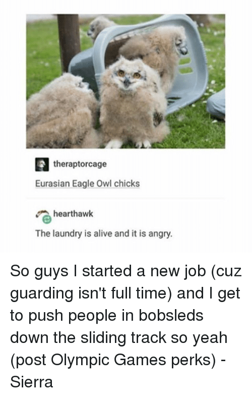 Owling: theraptorcage  Eurasian Eagle Owl chicks  hearthawk  The laundry is alive and it is angry. So guys I started a new job (cuz guarding isn't full time) and I get to push people in bobsleds down the sliding track so yeah (post Olympic Games perks) - Sierra
