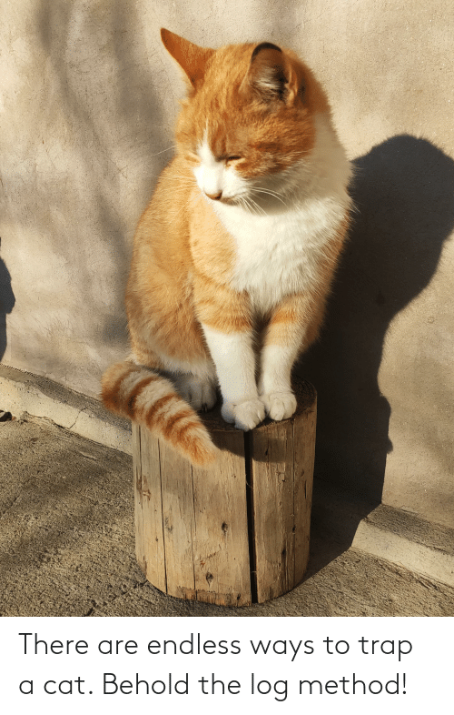 Trap, Cat, and Log: There are endless ways to trap a cat. Behold the log method!