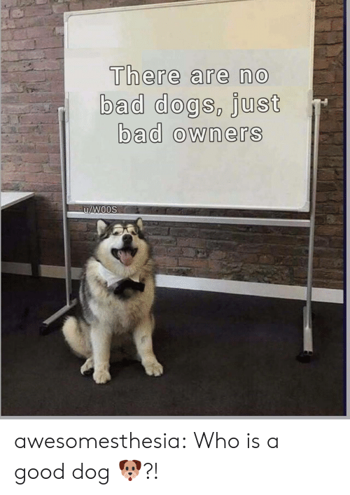 Bad, Dogs, and Tumblr: There are no  bad dogs, just  bad owners  u/Woos awesomesthesia:  Who is a good dog 🐶?!