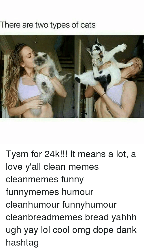 Clean Memes: There are two types of cats Tysm for 24k!!! It means a lot, a love y'all clean memes cleanmemes funny funnymemes humour cleanhumour funnyhumour cleanbreadmemes bread yahhh ugh yay lol cool omg dope dank hashtag