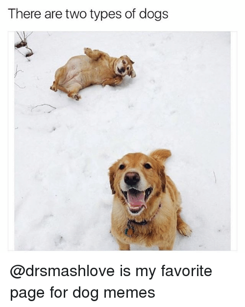 Dogs, Funny, and Memes: There are two types of dogs @drsmashlove is my favorite page for dog memes