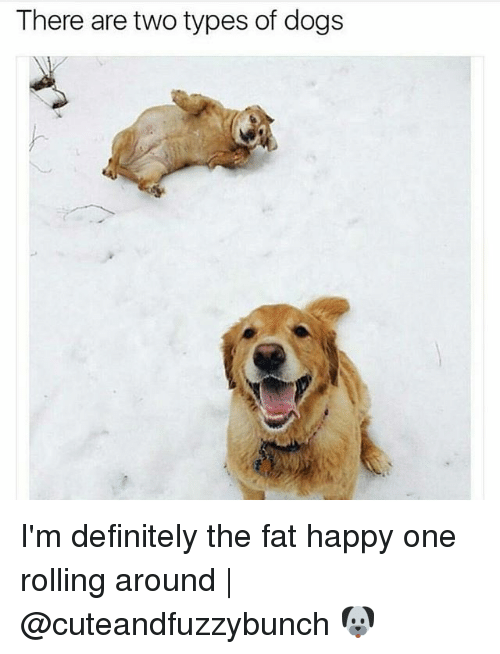 Definitely, Dogs, and Memes: There are two types of dogs I'm definitely the fat happy one rolling around | @cuteandfuzzybunch 🐶