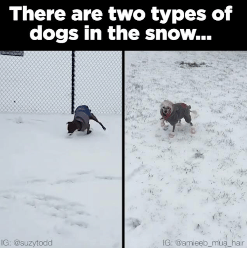 Memes, 🤖, and Types of Dogs: There are two types of  dogs in the snow...  IG: @suzytodd  IG: @amieeb mua hair