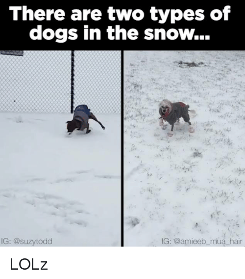 Memes, Snow, and 🤖: There are two types of  dogs in the snow...  IG: @suzytodd  IG: @amieeb mua hair LOLz