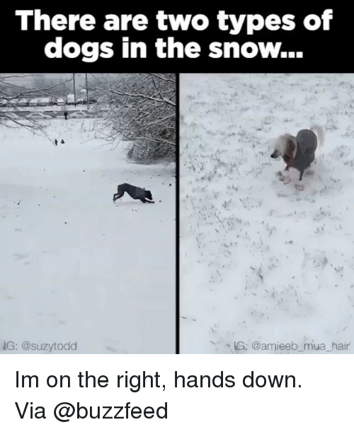 Memes, Buzzfeed, and Snow: There are two types of  dogs in the snow...  KG: @amieeb mua hair  NG: @suzy todd Im on the right, hands down. Via @buzzfeed