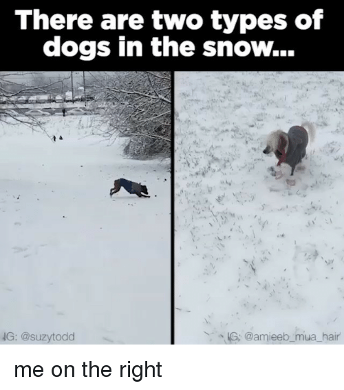 Snow, Relatable, and Types of Dogs: There are two types of  dogs in the snow...  NG: @suzytodd  KG: @amieeb mua hair me on the right