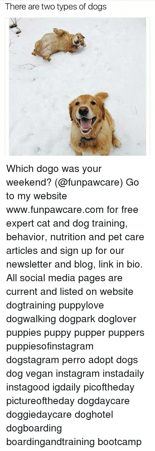 Dogs, Instagram, and Memes: There are two types of dogs Which dogo was your weekend? (@funpawcare) Go to my website www.funpawcare.com for free expert cat and dog training, behavior, nutrition and pet care articles and sign up for our newsletter and blog, link in bio. All social media pages are current and listed on website dogtraining puppylove dogwalking dogpark doglover puppies puppy pupper puppers puppiesofinstagram dogstagram perro adopt dogs dog vegan instagram instadaily instagood igdaily picoftheday pictureoftheday dogdaycare doggiedaycare doghotel dogboarding boardingandtraining bootcamp