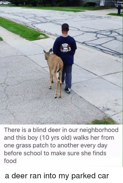 Deer, Food, and School: There is a blind deer in our neighborhood  and this boy (10 yrs old) walks her from  one grass patch to another every day  before school to make sure she finds  food a deer ran into my parked car